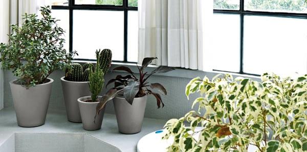 fensterdeko-frühling-schöne-grüne-pflanzen-im-badezimmer