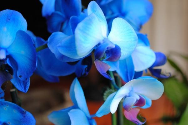 foto-einer-blauen-orchidee-blumendeko-hochzeitsdeko-ideen