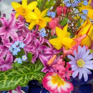 Frühlingsblumen - 100 faszinierende Bilder !