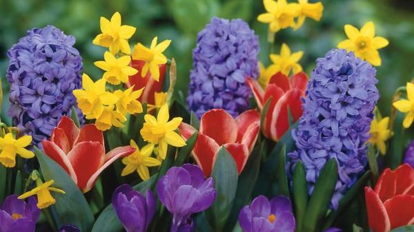 frühlingsblumen-bunte-farben