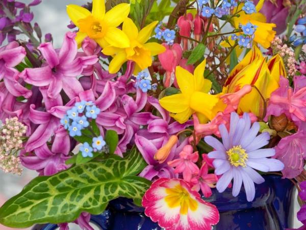frühlingsblume-narzissen-pflanzen-gelbe-blumen--hyazinthen