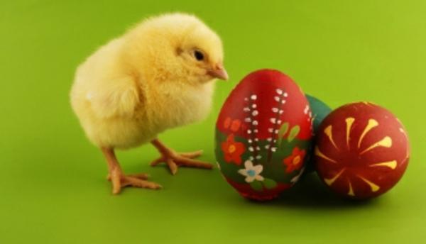 frohe-ostern-hühnchen-und-eier- super süße und cooles bild