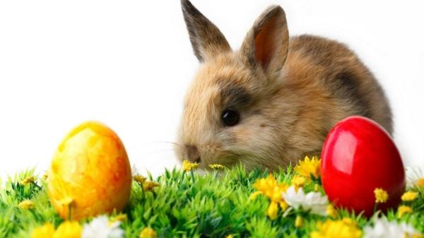 frohe-ostern-hase-und-bunte-eier- super süße und cooles bild