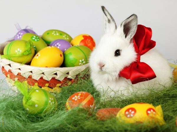 frohe-ostern-weißer-hase-mit-roter-schleife-neben-bunten-eiern