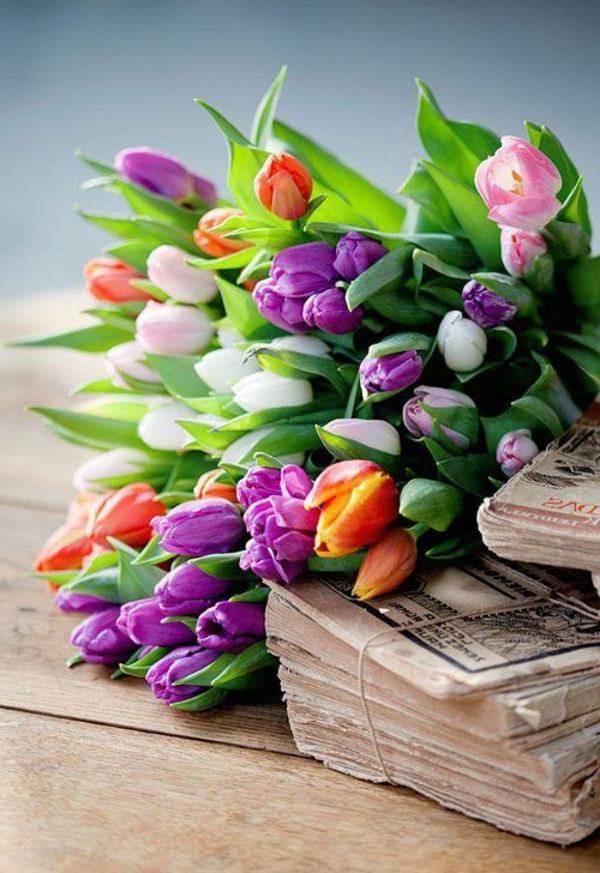 ganz-schöne-bilder-tulpen-pflanzen-die-tulpe-tulpen-aus-amsterdam-tulpen-bilder-tulpen-kaufen