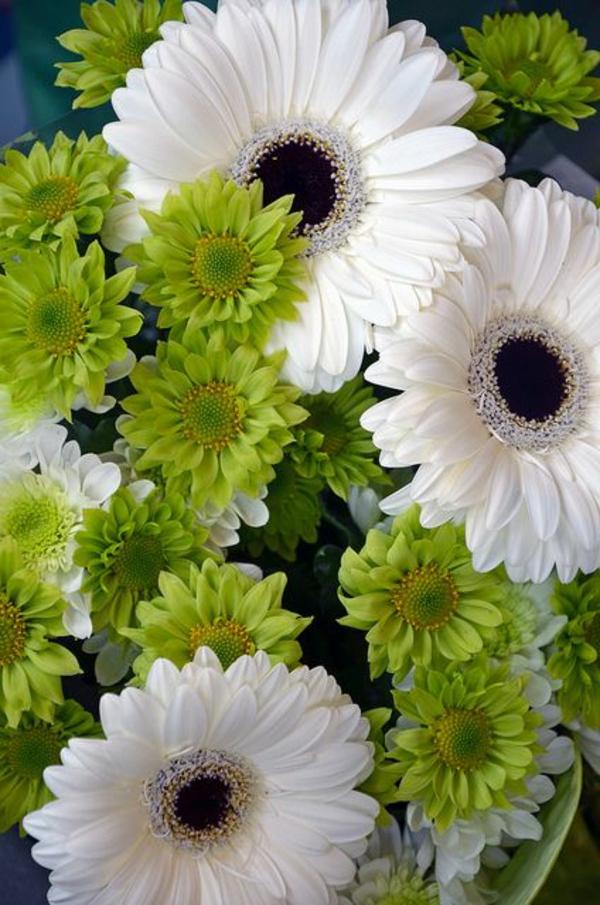 garten-gestalten-frühlingsblumen-gerbera-sommerblumen-in-weiß