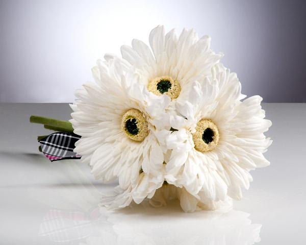 gartengestaltung-mit-schönen-blumen-sommerblumen-gerbera-schnittblumen-zimmerpflanzen-in-weiß
