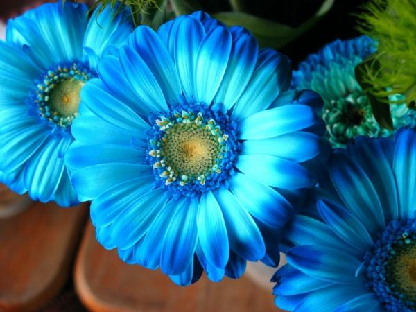 -gartengestaltung-mit-schönen-blumen-sommerblumen-gerbera-schnittblumen-zimmerpflanzen