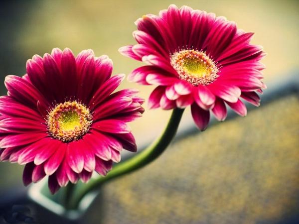 --gartengestaltung-mit-schönen-blumen-sommerblumen-gerbera-schnittblumen-zimmerpflanzen