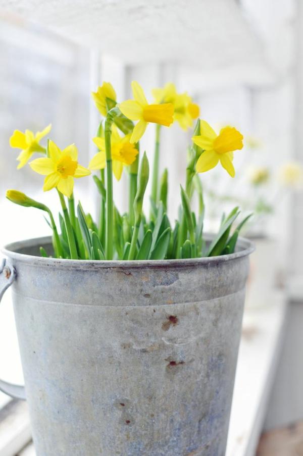 -gelbe-frühlingsblumen -frühlingspflanzen -pflanzen-gelb-osterglocken