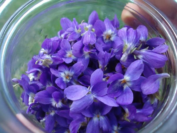 glasschale-mit-schönen-lila-blumen-blumendeko-pflanzen-deko