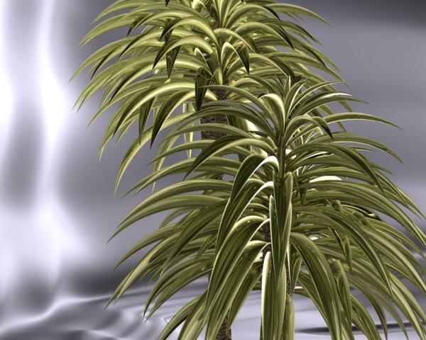 Yucca Palme Wohnzimmer : hauspflanzen-yucca-filamentosa-pflanzen ...