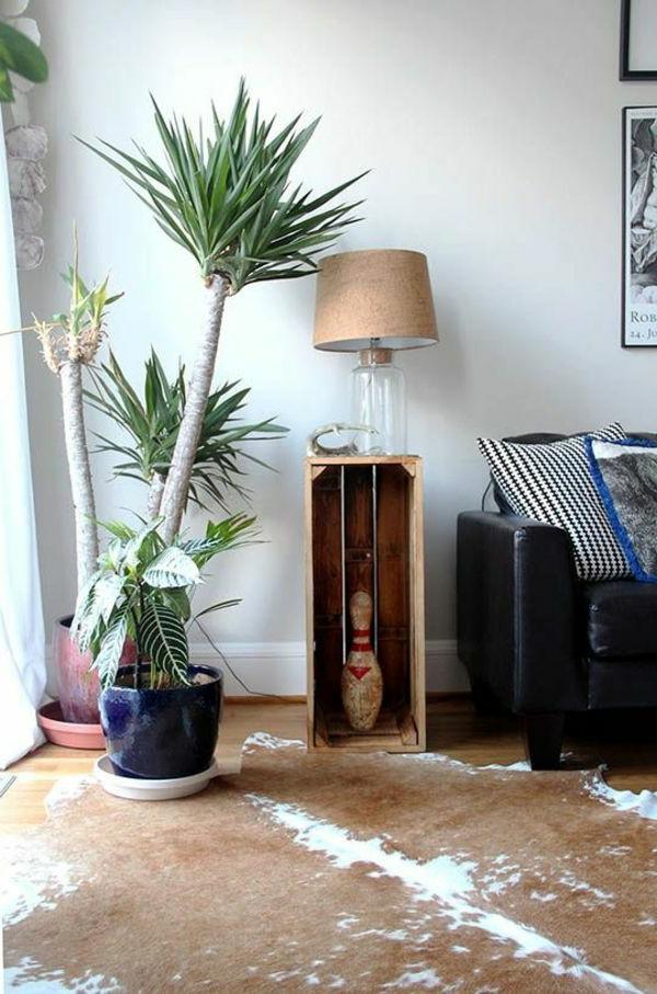 hauspflanzen-yucca-pflanze-gartenpflanzen-palmen-deko-für-den-garten