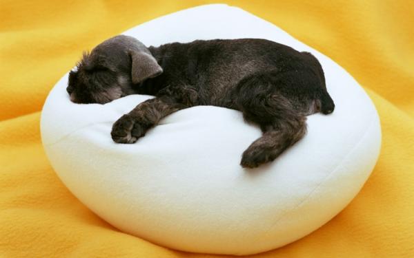 komfort-hundezubehör-luxus-kissen-für-den-hund
