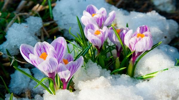 Fruhlingsblumen 100 Faszinierende Bilder Archzine Net