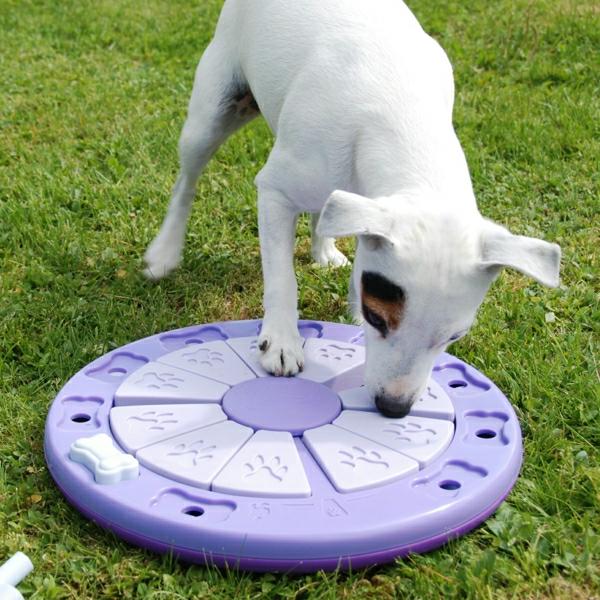 lila-spielzeug-hund-spielzeug-für-hunde-coole-idee-für-den-hund