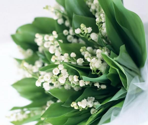 lily-of-the-valley-bilder-frühlingsblumen-maiglöckchen-giftig-blumenstrauß-weiß- Maiglöckchen