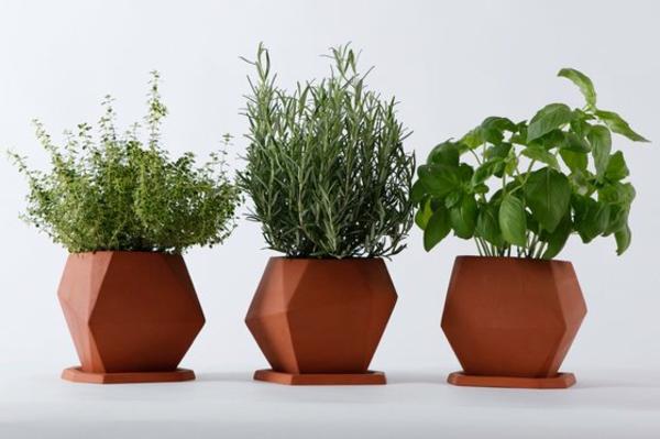 schöne-attraktiv-aussehende-und-interessante-dekorative-pflanzenkübel-drei-süße-stücke-und-weißer-hintergrund