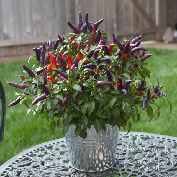 schöne-attraktiv-aussehende-und-interessante-dekorative-pflanzenkübel-eine-pflanze-auf-dem-tisch-im-garten