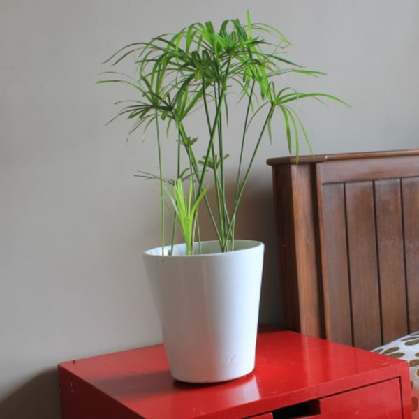 Fresh Indoor Plants Decoration Ideas For Interior Home: Plant Bucket For A Fresh House Decoration!
