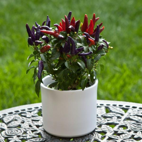 Schöne Attraktiv  Aussehende Und Interessante Dekorative Pflanzenkübel Wunderschöne