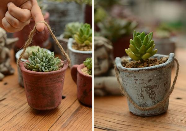 schöne-attraktiv-aussehende-und-interessante-dekorative-pflanzenkübel-wunderschöne-pflanzen-zwei-bilder