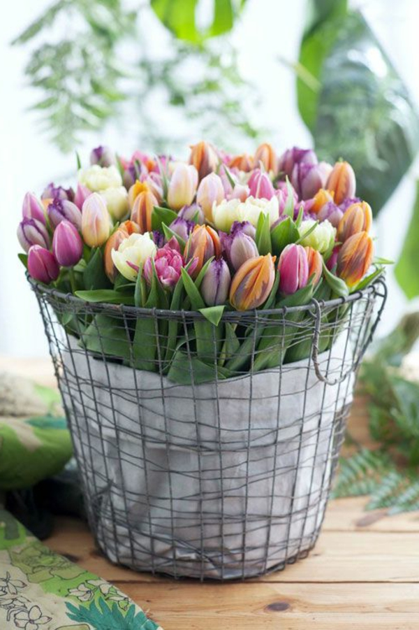 schöne--bilder-tulpen-pflanzen-die-tulpe-tulpen-aus-amsterdam-tulpen-bilder-tulpen-kaufen