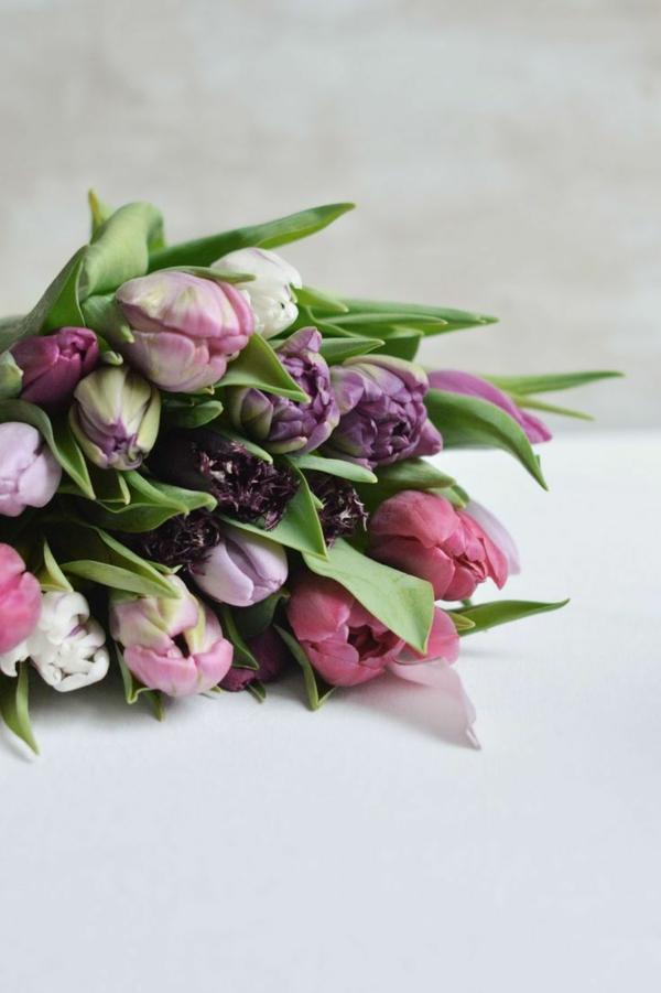 schöne-bilder-tulpen-pflanzen-die-tulpe-tulpen-tulpen-bilder-tulpen-kaufen