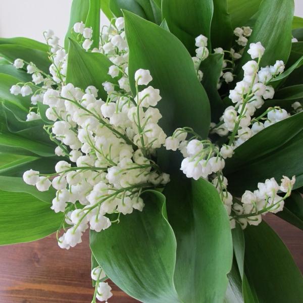 schöne-blumendeko-deko-ideen-blumendeko-weiße-frühlingsblumen-bilder-gartenblumen