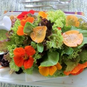 Essbare Blumen - lecker und schön! 105 Fotos