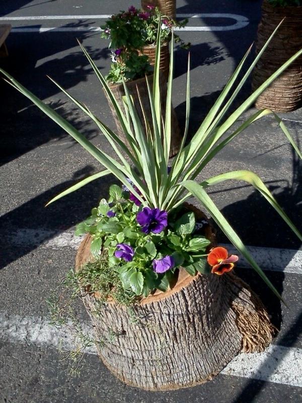 schöne-yucca-pflanze-gartenpflanzen-palmen-deko-für-den-garten