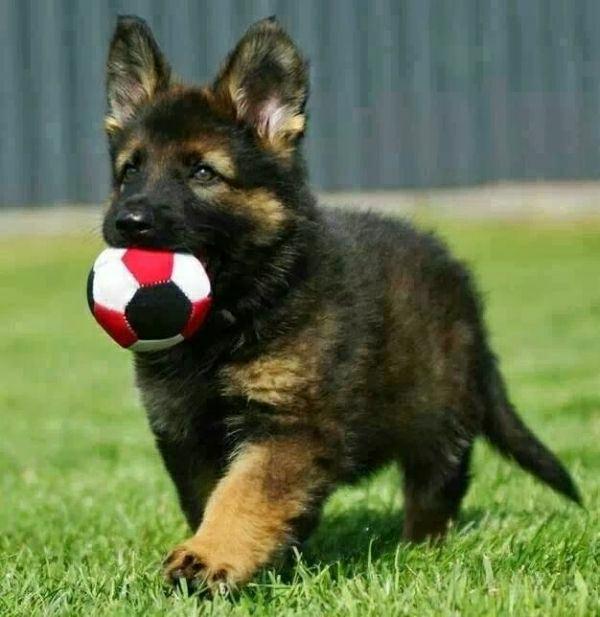 spielzeug-hund-spielzeug-für-hunde-coole-idee-für-den-hund-in-rot-und-weiß