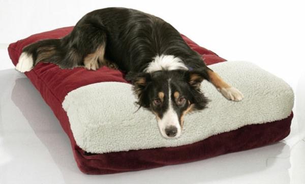 super-komfortables-hundezubehör-günstig-buntes-kissen-für-den-hund-