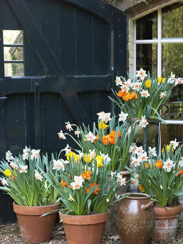 tolle-narzisse-frühlingsblumen-in-gelber-farbe-osterglöckchen-in-weiße-gelb-und-orange