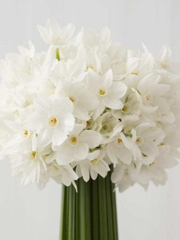 weiße--narzisse-gartenpflanzen-deko-für-den-garten-frühlingsblumen-blumenstrauß
