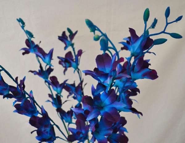 wilde-orchidee-blumendeko-ideen-zur-dekoration-in-blau