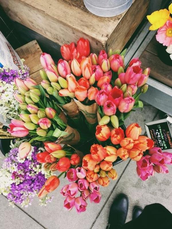 wunderbare-bilder-tulpen-pflanzen-die-tulpe-tulpen-aus-amsterdam-tulpen-bilder-tulpen-kaufen-