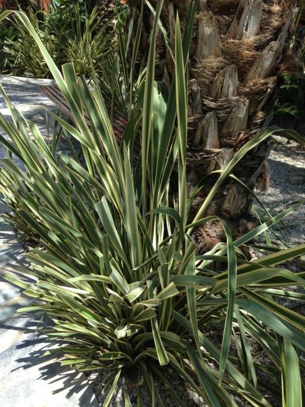 wunderbare-pflanzen-yucca-pflanze-gartenpflanzen-palmen-deko-für-den-garten