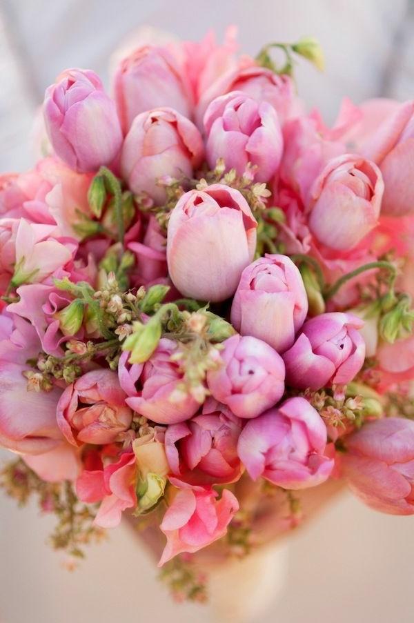 wunderschöne-blumenstrauß--tulpen-pflanzen-die-tulpe-tulpen-aus-amsterdam-tulpen-bilder-tulpen-kaufen