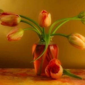 Frische Frühling Idee: französische Tulpen!