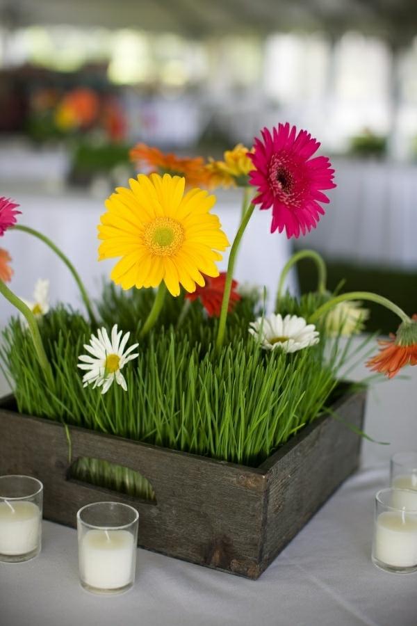 wunderschöne--zimmerpflanzen-gerbera-mehrere-farben-blumen-für-zuhause-