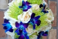 Blaue Orchidee – wunderschöne Blume in Blau