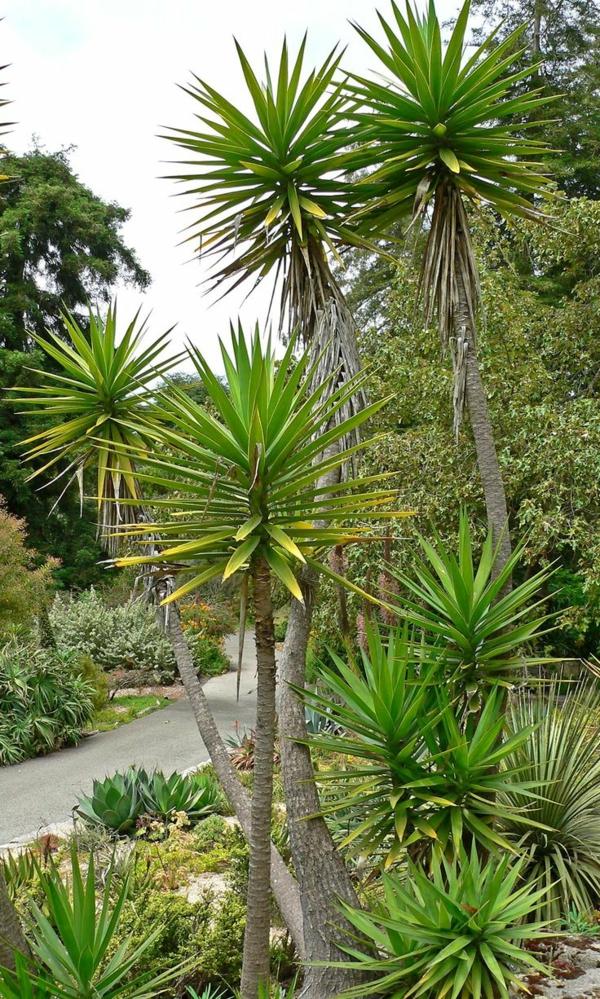 Yucca palme 26 fantastische bilder zur inspiration - Palme wohnzimmer ...