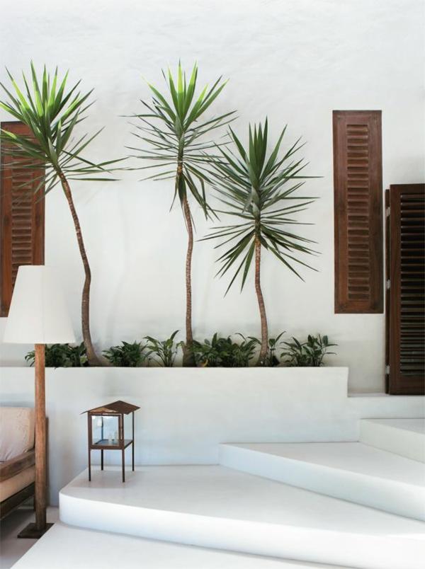 -yucca-palmen-schöne-pflanzen-für-innen-und-außen