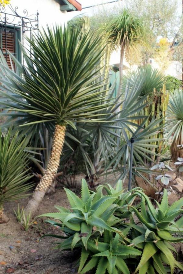 yucca palme 26 fantastische bilder zur inspiration. Black Bedroom Furniture Sets. Home Design Ideas