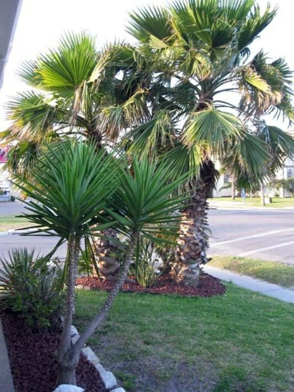 --yucca-pflanze-gartenpflanzen-palmen-deko-für-den-garten
