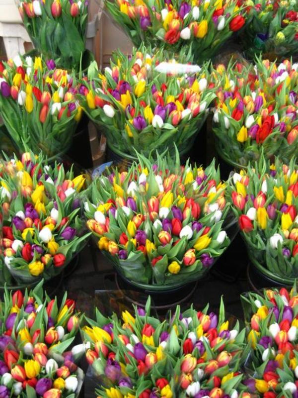 zahlreiche-tulpen-pflanzen-die-tulpe-tulpen-tulpen-bilder-tulpen-kaufen