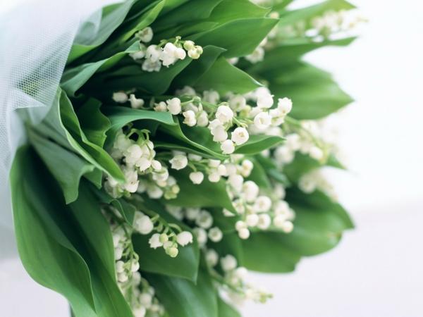 zarter-blumenstrauß-fantastische-blumen-frühlingsdeko-frühlingsblumen-in-weiß