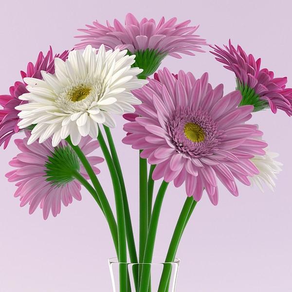 zimmerpflanzen-gerbera-mehrere-farben-blumen-für-zuhause