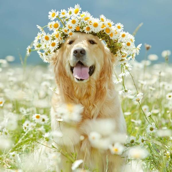 zufriedener-hund-blumendeko--wunderschöne-weiße-blumen-